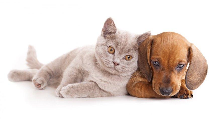 Animals-baby-cat-dog-HD-wallpaper