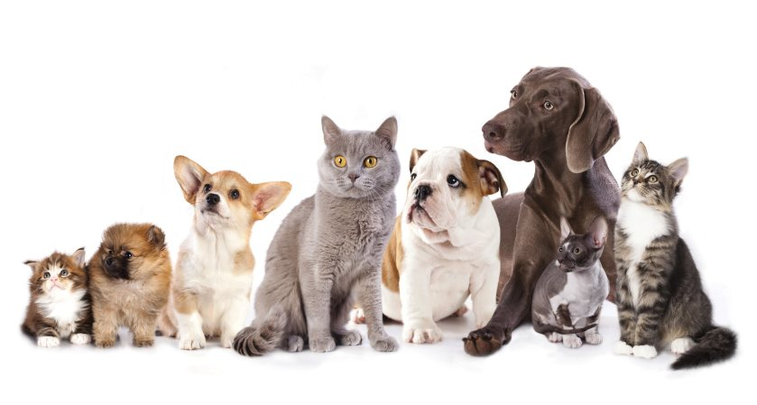 Cats-and-Dogs