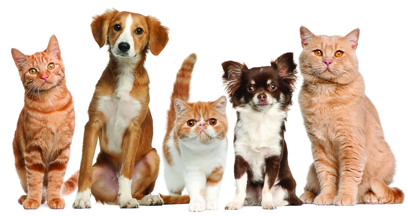 5184965-pets-wallpapers